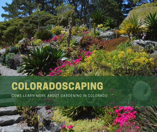 Picture of Douglas County Coloradoscaping: Spring Gardening Workshop