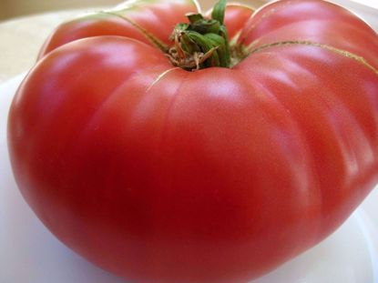 Picture of Heirloom tomato-Pink Mortgage Lifter
